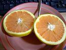 gurepfrutu.JPG